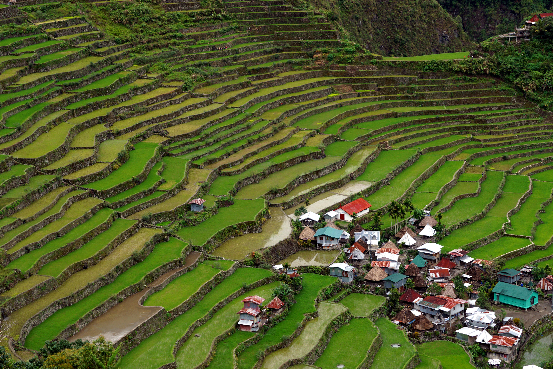 Batad rice terraces 1