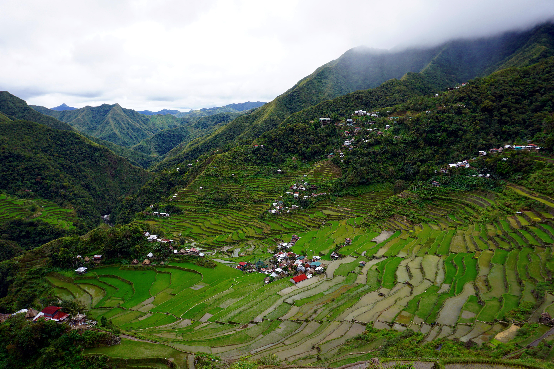 Batad rice terraces 3