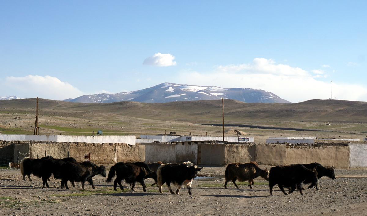 kargush route pamir tadjikistan bulunkul yashikul langar alichur yak