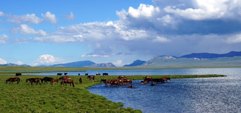 chevaux lac song kol Kirghizstan