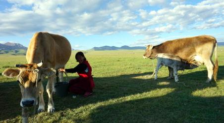 vache lac song kol Kirghizstan 2